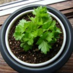 Grow your own celery from a store bought bunch.